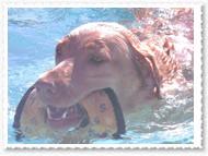 pool-004