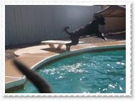 pool-007
