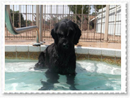 pool-009