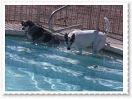 pool-010