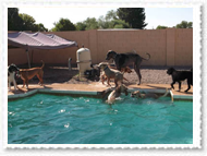 pool-014