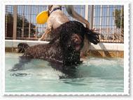 pool-019