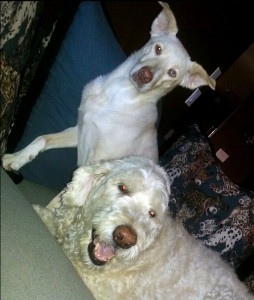 Janene's dogs