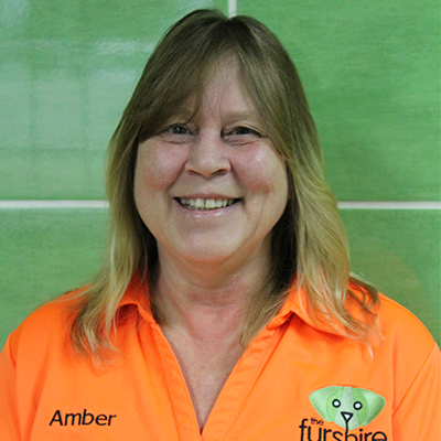 Amber groomer