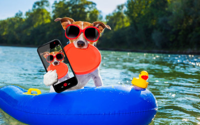 Spring Break for Your Pets!