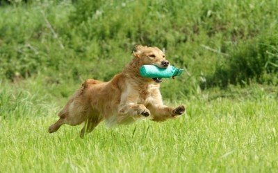 Flea and Tick Care for Your Dog