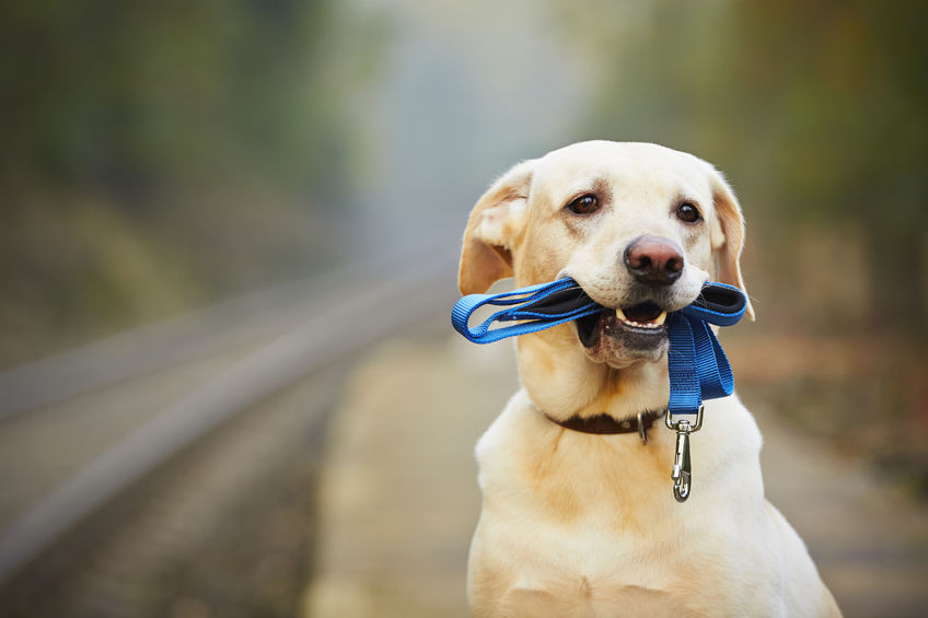 Training and Behavior Tips for Your Dog