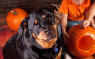 Tips to Keep Your Pets Safe at Halloween