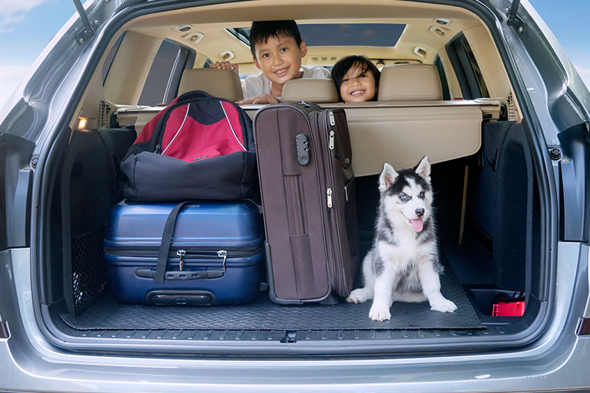 How to Keep Your Pets Safe When Traveling