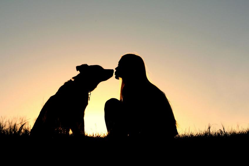 Dog Buying and Adoption Tips