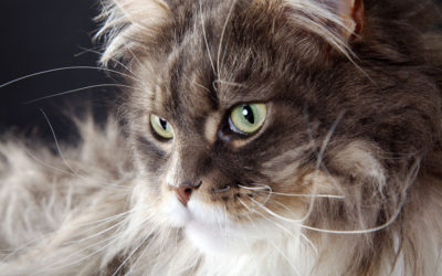 Does Your Cat Have Hairballs?