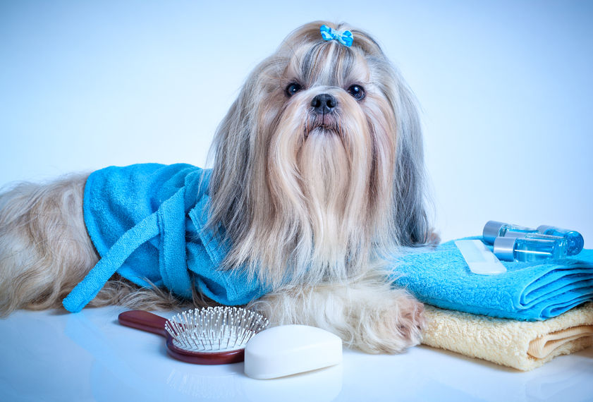 How Often Should You Groom Your Pet?