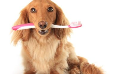 Does Your Pet Need Dental Care?