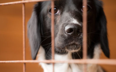 How to Find Reputable Rescue Facilities