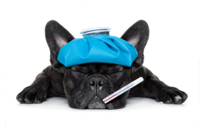 Common Kennel Cough Myths